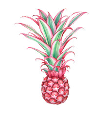 Mini pink pineapple isolated on white background. Watercolor illustration.