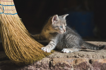 Small cute striped kitten playing with broomstick