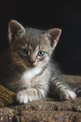Portrait of a small cute striped kitten