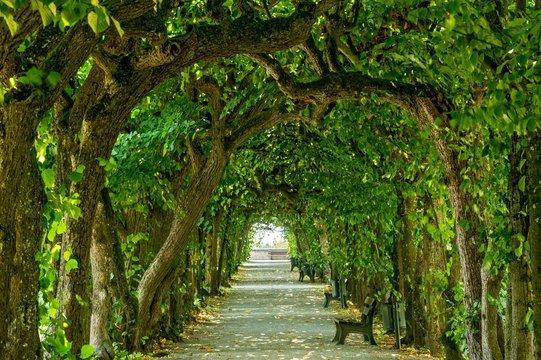 Lime tree arcade (Tilia), court garden, palace garden, Dachau Castle, Dachau, Upper Bavaria, Bavaria, Germany, Europe