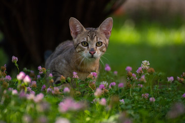 Gato en césped