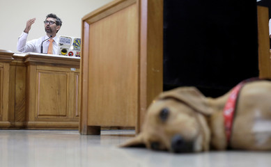 A dog called Campeon (Champion) rests as the judge Mario Rodriguez speaks during the trial of dog's former owner in Costa Rica's first trial against an alleged animal abuser, in Atenas