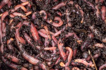 Search Photos Worms