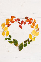 Closeup of autumnal fading leaves lying on a white wooden table. Frame in the form of a heart for the text of bright colored leaves. Copy space. Autumn concept