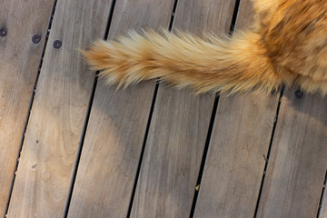 red wool cat tail top view on wooden deck floor simple background with empty space for copy or text, wallpaper pattern picture for some animal shelter with empty space for copy or text