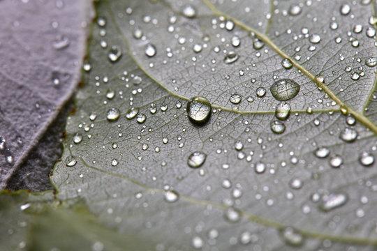 Macro photo of foliage with water drops. Natural layout. Flat lay