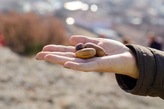 The acorn on the girl's hand.
