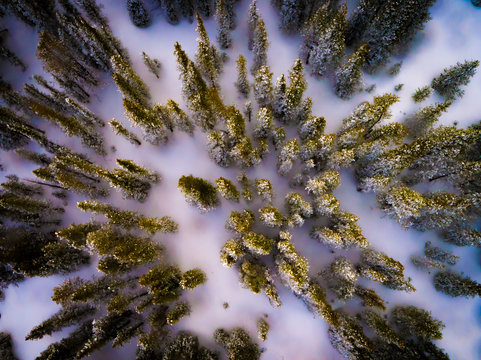 Trees in Snow from Drone