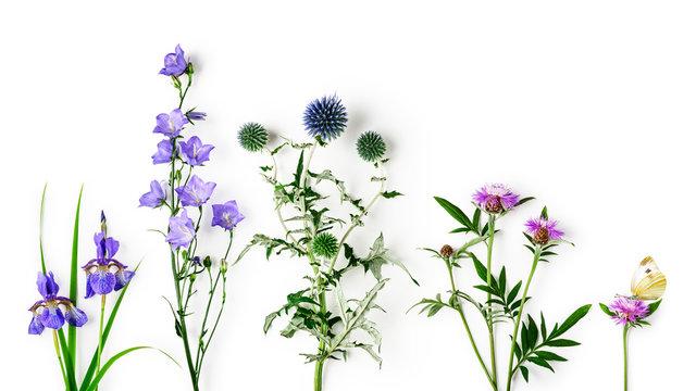 Summer garden flowers set.