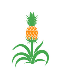 Pineapple Plant. Isolated pineapple on white background