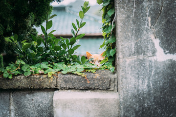 A cat with glass on a wall, Minami izu, Izu Peninsula, Shizuoka, Japan