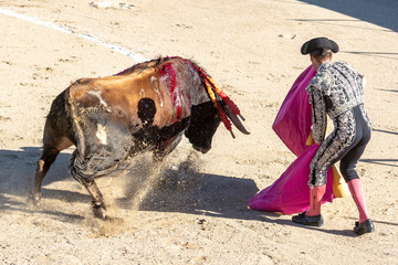 Bull and Bullfighter in Spain