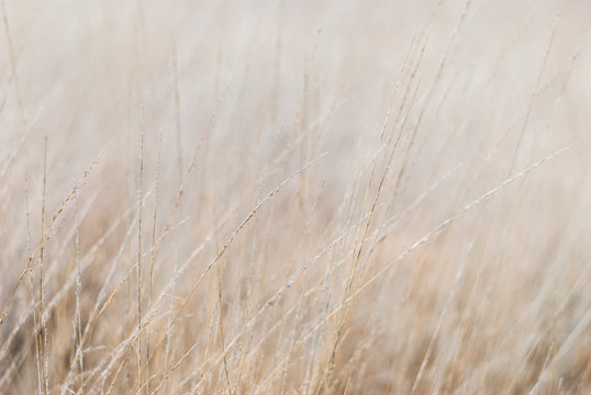 Dry grass in the meadow in winter. Close-up, blurred background, soft focus on individual straws. For a background in natural soothing colors.