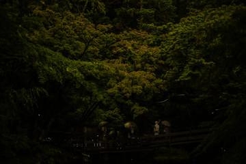 鶴岡八幡宮のホタル