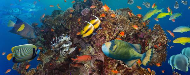 Keuken foto achterwand Koraalriffen Coral and fish