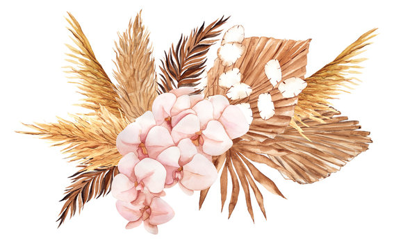 Bouquet with pampas grass, watercolor hand draw floral element in boho style, isolated on white background