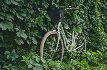 Fototapeten Fahrrad City bicycle with a basket on green ivy creeper wall background.