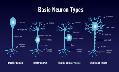 Basic Neuron Types Composition