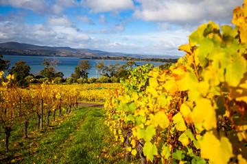 Wineyards in Tamar Valley, Tasmania, Australia Fototapete