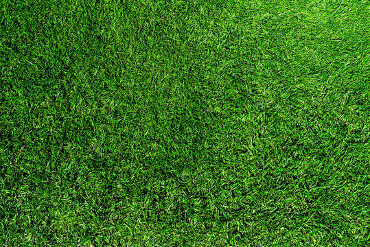 directly above shot of fresh green grass or lawn