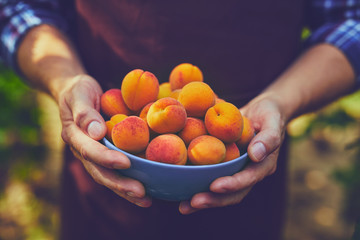 Close up of man with full bowl of ripe apricots
