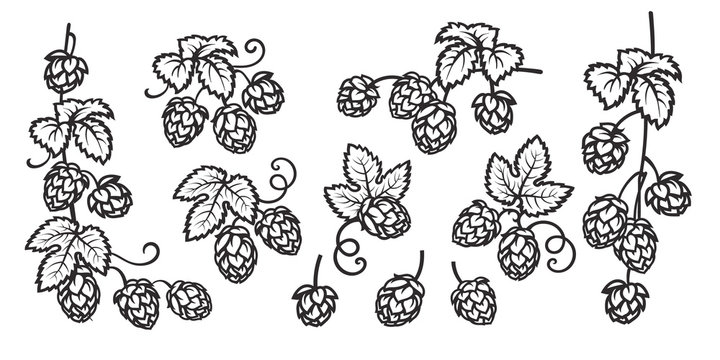 Branches of hops. Set of elements for brewery design. Hop cones with leaves icons. Ribbon banner with text. Hand drawn vector illustration on white background.