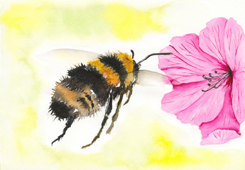 Watercolor picture of   a honey bee with bright pink flower and yellow background