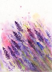 Watercolor picture of   vivid purple lavender flowers in wet technique