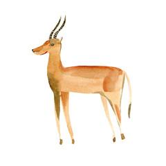 Gazelle. Wild animal image.Watercolor hand drawn illustration.White background.