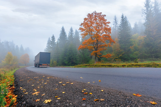 new asphalt road through forest in fog. truck driving by in to the distance. mysterious autumn scenery in the morning. tree in orange foliage, some leaves on the ground. gloomy overcast weather.