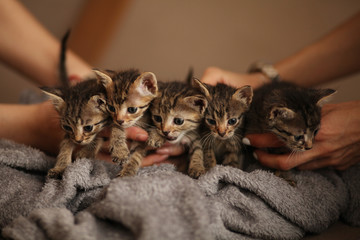 Brood of little cute kittens on blanket. Care in animal shelter.