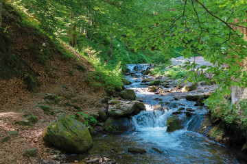 brook among the rocks in summer forest. green foliage on the trees. beautiful nature scenery