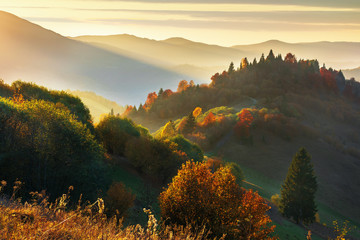 beautiful autumn sunset in mountains. trees on the hill in fall foliage. distant ridge in sunlight. beautiful countryside scenery on a warm october evening