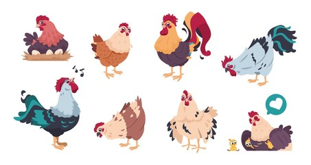 Chicken and rooster. Cute poultry farm characters, cartoon chick with baby chickens isolated. Vector illustrations colourful domestic birds set on white background