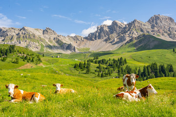 Photo sur Aluminium Vache Scenery Alps with cow on green field