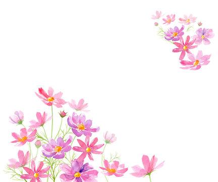 コスモスの花の水彩イラストで装飾した背景、メッセージカード
