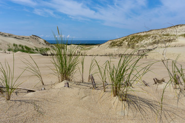 Landscape of Lithuania. Isthmus of Courland. Dunes