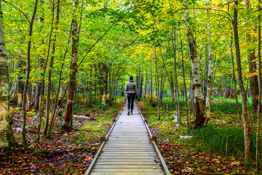 Female hiker on Jesup Trail wooden footpath among the fall foliage