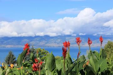 canna lily seascape