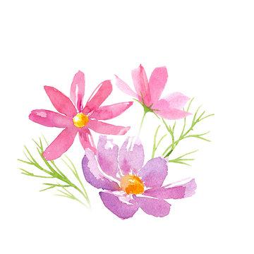 コスモスの花のアレンジメントの水彩イラスト