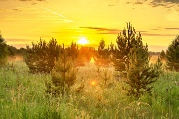 Autocollant pour porte Jaune spring landscape with forest and meadow at sunrise