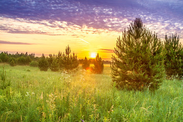spring landscape with forest and meadow at sunrise