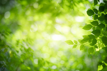Closeup nature view of green leaf on blurred greenery background in garden with copy space using as...