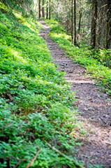 der Weg im Wald
