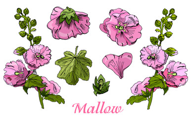 Collection with  bouquet and single flowers of pink mallow and g