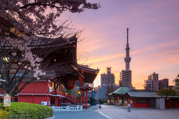 Sunrise at Sensoji Temple in Cherry blossom season, Tokyo, Japan, Asia