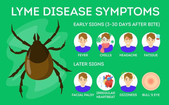 Lyme disease symptoms. Danger for health from tick