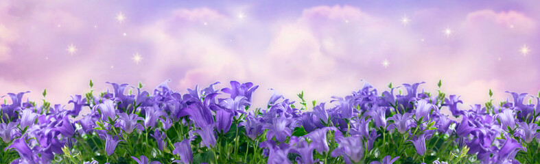 Wall Mural - Wide panoramic banner with fantasy blooming bluebells campanula flowers in garden against the magical sky with spectacular clouds and shining stars