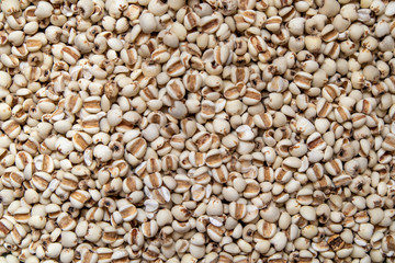 Picture of millet or job's tears is cereal and is food because it is used to advertise food.