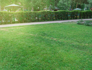 Keuken foto achterwand Lime groen Hedge along the path and lawn with green grass in the Park, picturesque bright sunrise in the city Park in summer